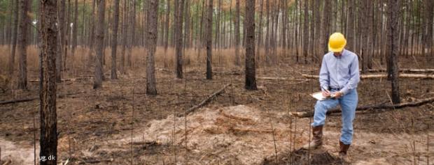 Hvordan bliver man skovfoged?