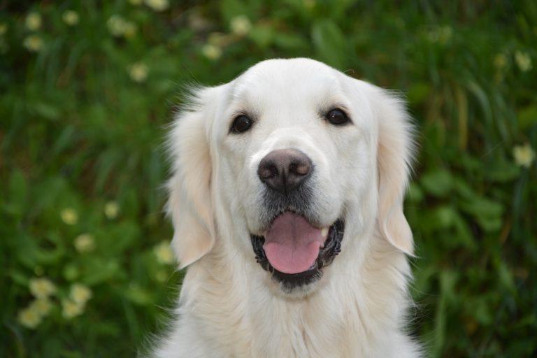 hund hunde frisør hundefrisør