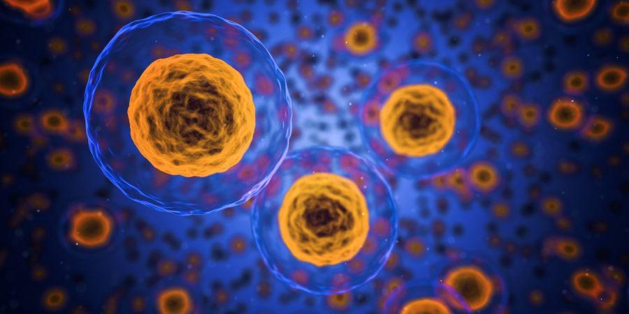 celler medicin speciallæge
