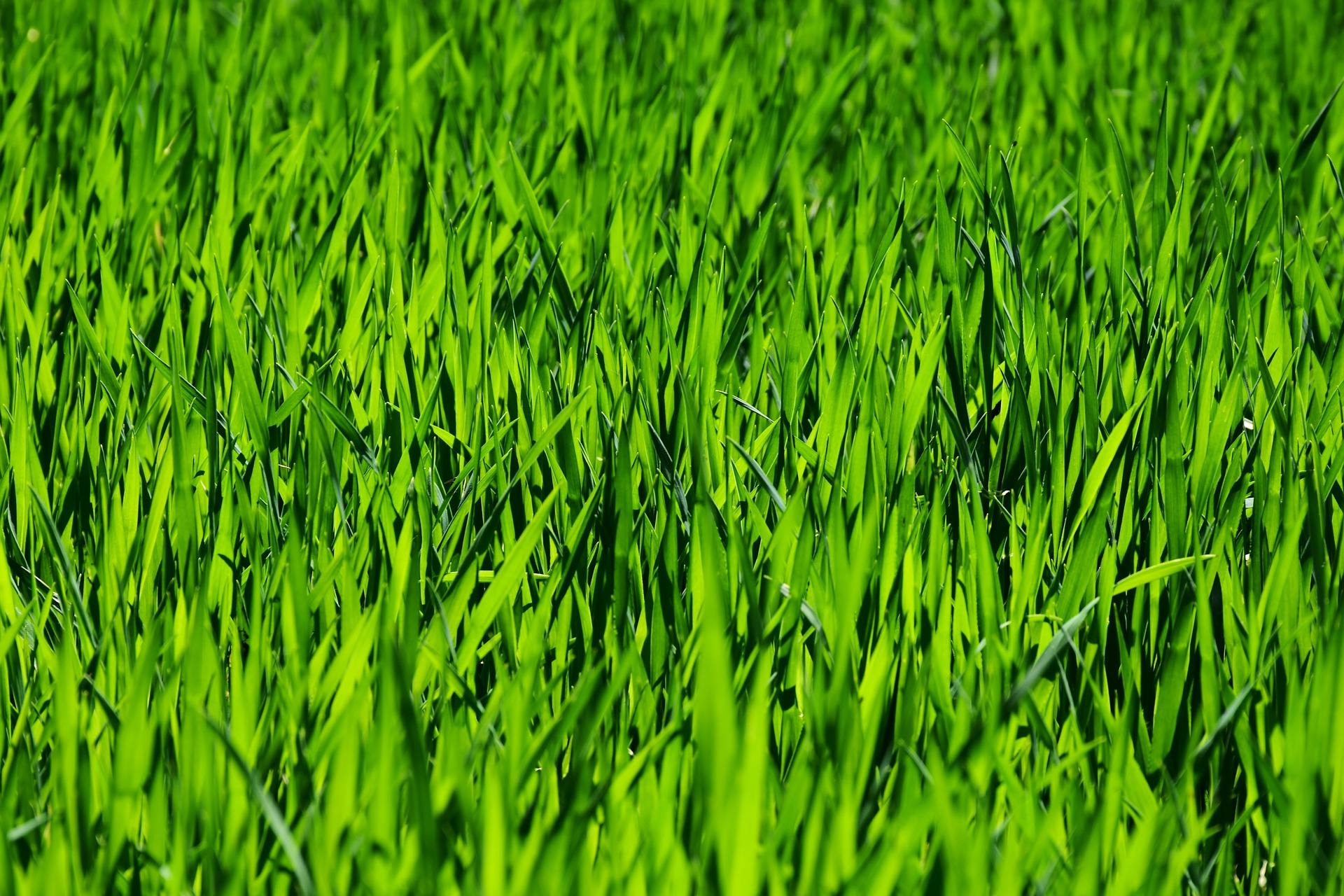 gartner have park anlæg græs