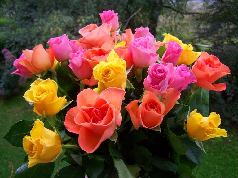 blomster blomsterdekoratør blomsterbinder blomsterhandel