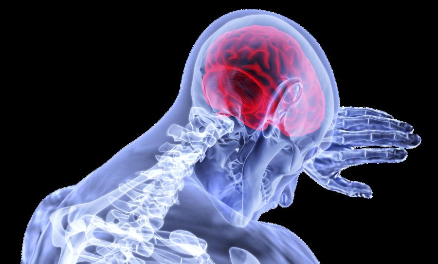 hjerne neuropsykolog
