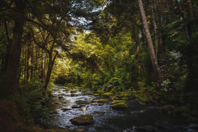 bæk skov